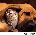 Kitten protect by dog makes great friendship