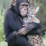 Monkey and cheetah great friends