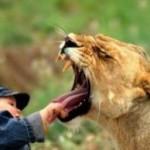 liontrust