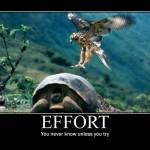 e-for-effort