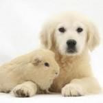 puppyhamster