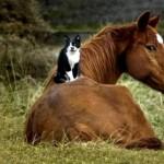 cat_horse