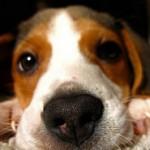 pet-close-up-tuffy